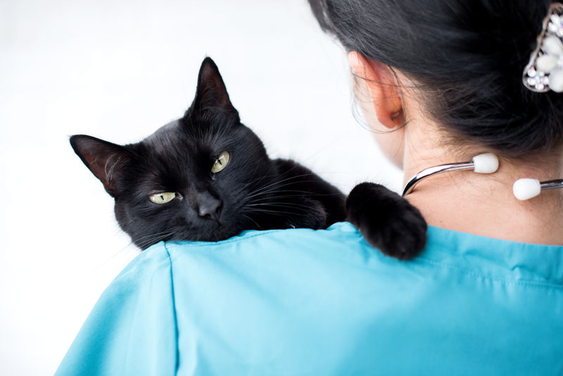 You can be a Travel Nurse with Pets!